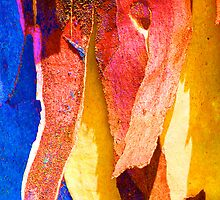 Summer Eucalypt Abstract 20 by Margaret Saheed