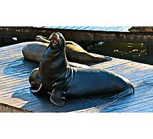 Sea Lion San Francisco Photographic Print
