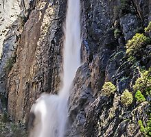Lower Yosemite Falls - California USA by TonyCrehan