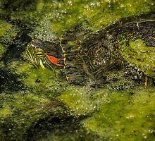 Mossy camouflage by Celeste Mookherjee