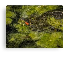 Mossy camouflage Canvas Print