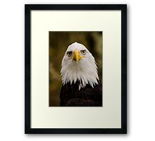 Portrait of a Bald Eagle Framed Print