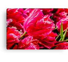 Totally Tulips Canvas Print