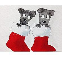 Scottie Xmas Stockings Photographic Print