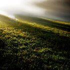 The Fog Wave by Imi Koetz