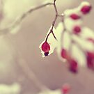 snow berries by irishgirl7