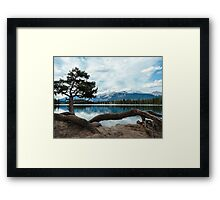 Set down your roots to find peace Framed Print