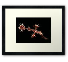 Harlequin ghost pipefish Framed Print