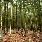 Trees by Adrian Harvey
