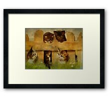 Kittens at the Fence Framed Print