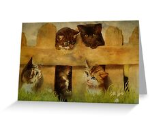 Kittens at the Fence Greeting Card