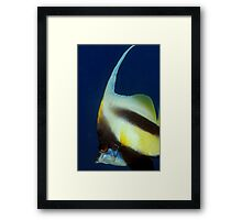 bannerfish Framed Print