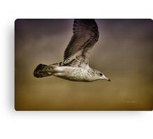 Seagull Oil Canvas Print