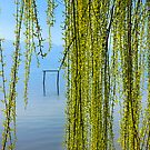 Natural curtain @ Lake Kerkini by Hercules Milas