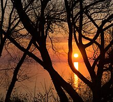 Sunrise Through the Willows - Lake Ontario, Toronto, Canada  by Georgia Mizuleva