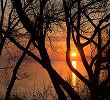 Sunrise Through the Willows - Lake Ontario, Toronto, Canada  by Georgia Mizuleva