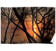 Sunrise Through the Willows - Lake Ontario, Toronto, Canada  Poster