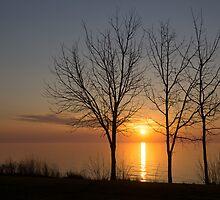 Three Trees and the Sun by Georgia Mizuleva