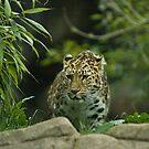 Jaguar2 by laurav