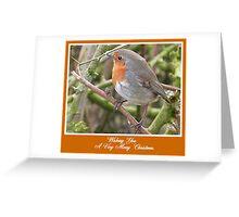 Robin in Hedge at Garstang, Lancashire, Greeting Card