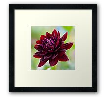 Holly Hill Black Widow Framed Print