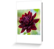 Holly Hill Black Widow Greeting Card