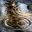 Rain Puddle in Autumn by Mikell Herrick