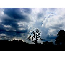 The Lone Tree Photographic Print