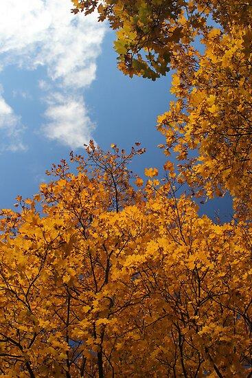 Fall In My Back Yard 3 by marybedy