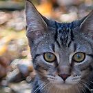 Kitty with Bokeh by Mikell Herrick