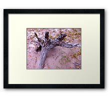 Earthly Grave 2 Artistic Photograph by Shannon Sears Framed Print