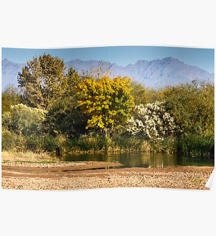 Majestic Trees Poster