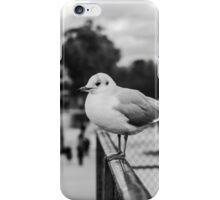 Perched seagull in Jardin des Tuileries, Paris, France iPhone Case/Skin