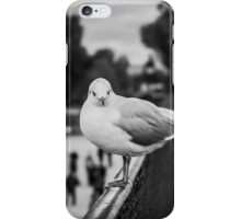 Perched seagull facing the camera in Jardin des Tuileries, Paris iPhone Case/Skin
