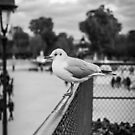 Perched seagull looking straight ahead in Jardin des Tuileries, Paris by OlivierImages