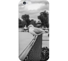 Perched seagull looking straight ahead in Jardin des Tuileries, Paris iPhone Case/Skin