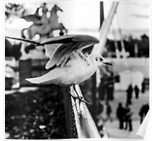 Seagull taking off in Jardin des Tuileries, Paris, France Poster
