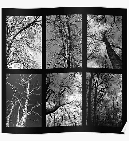 The Beauty of Trees 2 Poster
