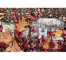 Autumn Bric-a-Brac Photographic Print