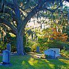 Cemetery Moss by Leon Heyns
