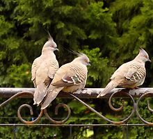 Fence Sitters by Gabrielle  Lees