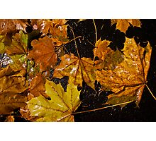 Wet Leaves on the Dirty Ground Photographic Print
