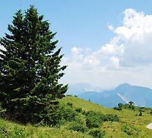 Landscape on Monte Zoncolan by jojobob