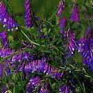 Wild and Purple by Paula Tohline  Calhoun