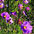 The Color Purple by Paula Tohline  Calhoun