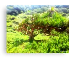 Dune Forest  Canvas Print