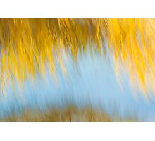 Autumn's Final Curtain Photographic Print