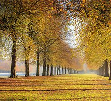 Marbury Country Park - Lime Avenue in November by Joe Wainwright