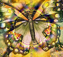 Beautiful Butterfly by Brian Exton