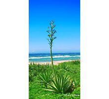 Flowering Aloe  Photographic Print